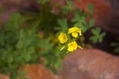 Bild, wo drei gelbe Blumen Raum für Textkopientext verlassen lizenzfreies stockbild