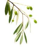 Bilda oliv royaltyfria foton