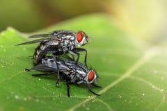Bilden av att para ihop flyger på gröna sidor kryp angus arkivfoton
