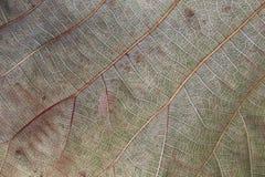 Bilden av bakgrundstextur av bruna sidor är torr Arkivbild