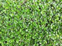 Bilden av buskebakgrunden Arkivfoto