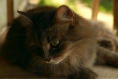 Bilden av en brun katt som ser till sidan Begreppet av djurskydd royaltyfri foto