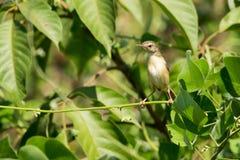 Bilden av en fågel sätta sig på ett grönt blad wild djur Royaltyfri Bild