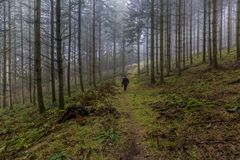 Bilden av en kvinna som går bland högväxt, sörjer träd i skogen fotografering för bildbyråer