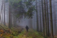 Bilden av en kvinna som går bland högväxt, sörjer träd med mycket dimma i skogen royaltyfri bild