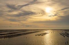 Bilden av en ostronlantgård i solnedgång Royaltyfri Bild