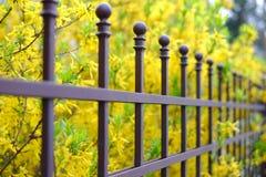 Bilden av ett härligt dekorativt metallstaket med det konstnärliga smidet på a mot våren blommar bakgrund Järnledstångslut upp arkivfoto