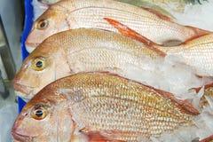 Bilden av hela snapper säljer på fiskmarknaden Slut upp snapperfis arkivfoto