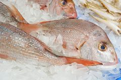 Bilden av hela snapper säljer på fiskmarknaden Slut upp snapperfis royaltyfria bilder