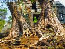 Bilden av träd och templet, Angkor, Cambodja Royaltyfri Bild