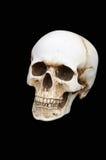 bilden för black för bakgrund 3d framförde den mänskliga skallen Royaltyfria Foton