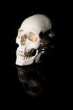 bilden för black för bakgrund 3d framförde den mänskliga skallen Royaltyfri Fotografi