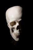 bilden för black för bakgrund 3d framförde den mänskliga skallen Arkivbild