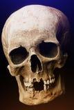 bilden för black för bakgrund 3d framförde den mänskliga skallen Signalljuseffekt Royaltyfri Fotografi