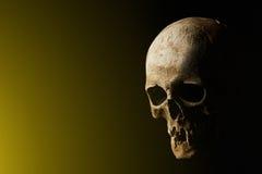 bilden för black för bakgrund 3d framförde den mänskliga skallen Signalljuseffekt Royaltyfria Bilder