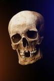 bilden för black för bakgrund 3d framförde den mänskliga skallen Signalljuseffekt Royaltyfri Foto