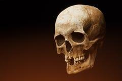 bilden för black för bakgrund 3d framförde den mänskliga skallen Signalljuseffekt Arkivbilder