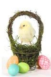 Bilden med behandla som ett barn fågelungar och ägg Arkivbild