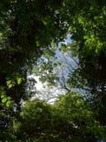 Bilden togs på den Cedarvale parken, Toronto Fotografering för Bildbyråer
