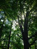 Bilden togs på den Cedarvale parken, Toronto Arkivfoton