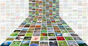 bilder Fotografering för Bildbyråer