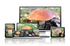 Bilder av champinjoner är på skärmarna av datoren Royaltyfri Fotografi