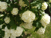 Bilder von blühenden Bäumen, von schneebedeckten Bäumen und von schönen Blumen Lizenzfreie Stockbilder
