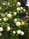 Bilder von blühenden Bäumen, von schneebedeckten Bäumen und von schönen Blumen Lizenzfreies Stockfoto