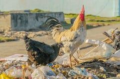 Bilder von Kuba - Baracoa Lizenzfreie Stockfotografie
