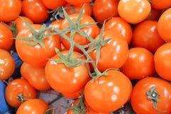 Bilder von vielen bündeln Tomaten innerhalb des Falles Stockfotografie