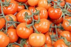 Bilder von vielen bündeln Tomaten innerhalb des Falles Stockbild