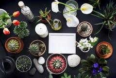Bilderrahmen-Modell Kaktus, saftige Anlagen, Tulpen und dekorative Felsen Ansicht von oben lizenzfreie stockbilder