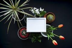 Bilderrahmen-Modell Kaktus, saftige Anlagen, Tulpen und dekorative Felsen Ansicht von oben lizenzfreies stockbild
