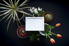 Bilderrahmen-Modell Kaktus, saftige Anlagen, Tulpen und dekorative Felsen Ansicht von oben stockfotografie