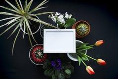 Bilderrahmen-Modell Kaktus, saftige Anlagen, Tulpen und dekorative Felsen Ansicht von oben stockbild