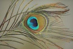 Bildhand som målas med aquarellen royaltyfri fotografi