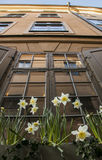 A bilding in Gamla Stan, Stockholm, Sweden. A view of a building in Gamla Stan, Stockholm, taken looking up. There are some flowers visible at the bottom of the royalty free stock photography