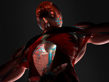 Bildläsning av muskler och artärer Arkivbild