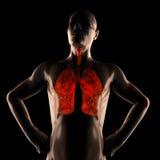 Bildläsning för människabröstkorgradiography Arkivfoton
