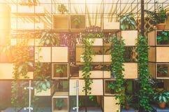 Bildramar och blomkruka på hyllor över trägrungeväggen i vardagsrum Dekorativ stil för tappning Fotografering för Bildbyråer