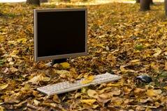 Bildskärmen från datoren är på den gula lövverket för hösten i gården fotografering för bildbyråer