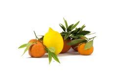 Bildtangerin och citroner Royaltyfri Fotografi