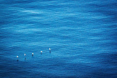 Bildung Brown-Pelikane im Flug Lizenzfreie Stockfotografie