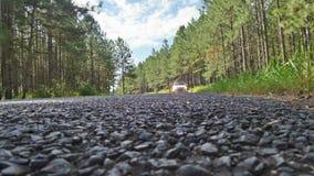 Bilen i avståndet sörjer trädvägen Arkivbild