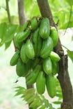 Bilimbi owoc Zdjęcie Stock