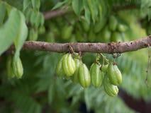 Bilimbing-Frucht Stockbilder