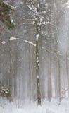 Bilizzard Zeit im Wald Lizenzfreie Stockbilder