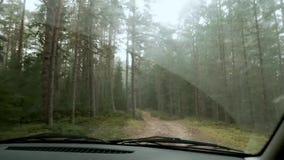 Bilkörning på den lantliga höstskogvägen arkivfilmer