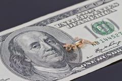 Bill di cento dollari Immagine Stock