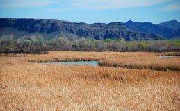 Bill Williams River Valley Fotografía de archivo libre de regalías